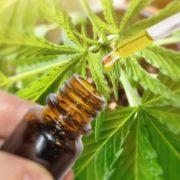 El Concejo Deliberante de Lomas aprobó el uso medicinal de cannabis