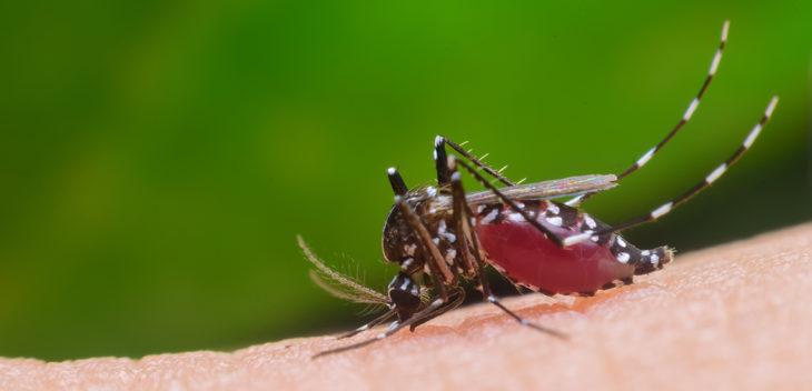 Dengue: los casos en 2020 ya superaron en un 45 por ciento a los del brote de 2016