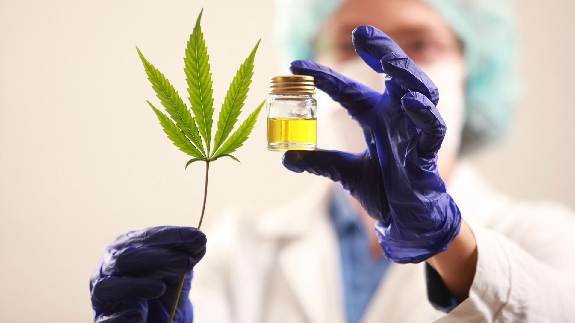 Cannabis medicinal: el Gobierno reglamentó el autocultivo y el uso del aceite de cáñamo