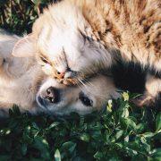 Aumentaron las adopciones de mascotas durante la pandemia