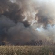 La Laguna de Rocha sufrió otro incendio