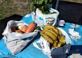 Mercado Federal Ambulante: dónde estarán este lunes 25 de octubre en Lomas de Zamora, Lanús y Almirante Brown las ferias donde se consiguen 15 kilos de frutas y verduras a $ 690