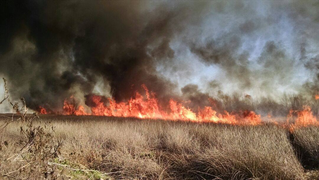 Incendio en Laguna de Rocha