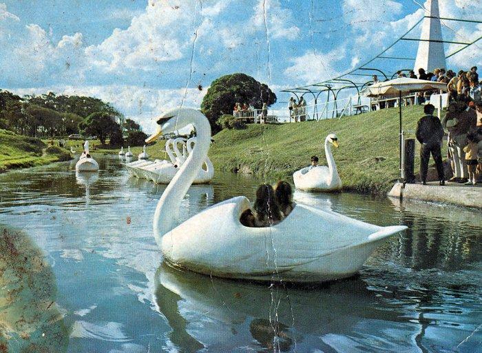 cisnes-2.jpg