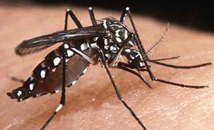 Crean un dispositivo para el control del mosquito que propaga el dengue