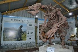 Encuentran restos de un megaterio en Mar del Plata