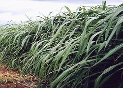La Ceamse y la UNLZ, en un proyecto para producir biocombustibles