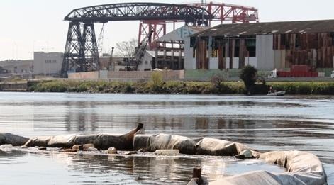 «Es más alta la contaminación domiciliaria que la industrial»